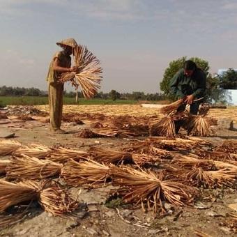 Quy trình sản xuất túi xách lục bình